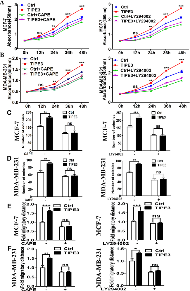 Inhibiting the NF-κB and AKT signaling blocks the TIPE3 effects on proliferation and migration of breast cancer cells.
