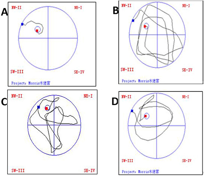 The effect of treadmill running on trajectories in the water maze of rats in each group.