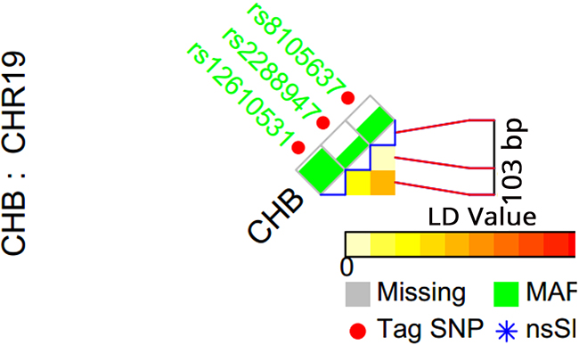 TagSNP selection for TINCR gene.