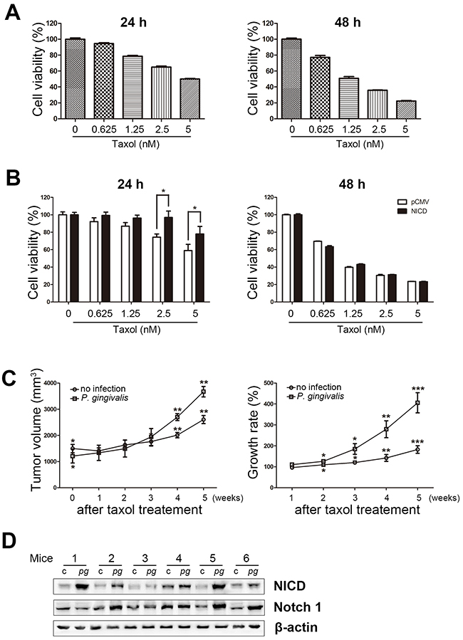 Figure 3. Overexpression of NICD decreases Taxol-induced cell death in OSCC cells.