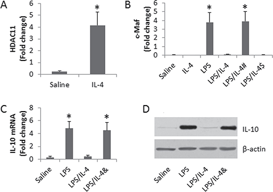 Assessment of the role of HDAC11 in the IL-4-suppressed IL-10 expression in DCs.