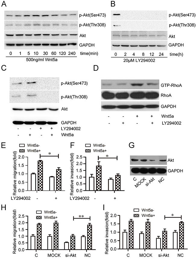 Effect of PI3K/Akt on Wnt5a-induced RhoA activation and MOLT4 cell migration and invasion.
