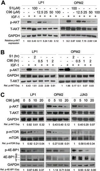 C96 inhibits AKT and mTOR signaling.