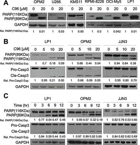 C96 activates apoptotic signaling in MM cells.