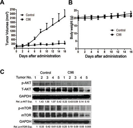 C96 delays myeloma tumor growth in a xenograft mouse model.