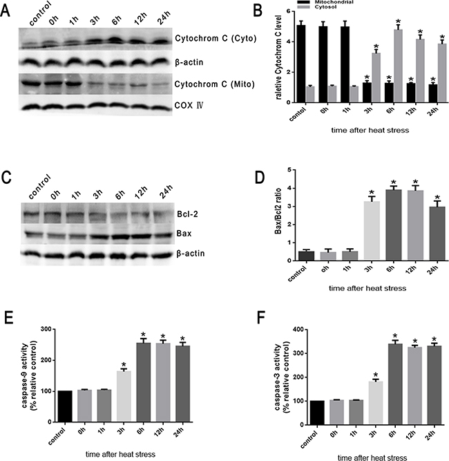 Heat stress induces the activation of mitochondrion-associated pro-apoptotic proteins in SW480 Cells.