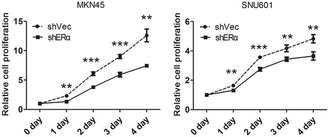 Downregulation of ERα inhibited the proliferation of GC cells in vitro.