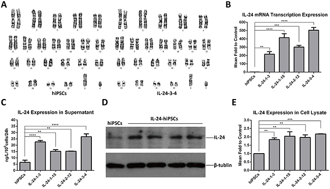 Analysis of IL24 expression in tranformed iPSCs.