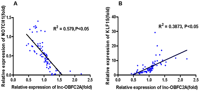 The correlation analysis between lncRNA-OBFC2A expression and cell proliferation-related genes expression.