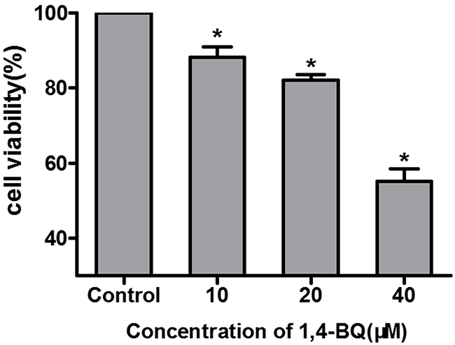 Cytotoxicity of AHH-1 cells induced by 1, 4-BQ.