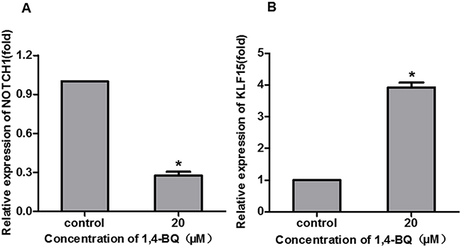 1, 4-BQ changed the proliferation-related gene expression.