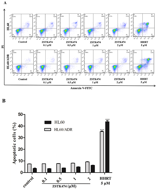 ZSTK474 did not induce obvious apoptosis in HL60 and HL60/ADR cells.