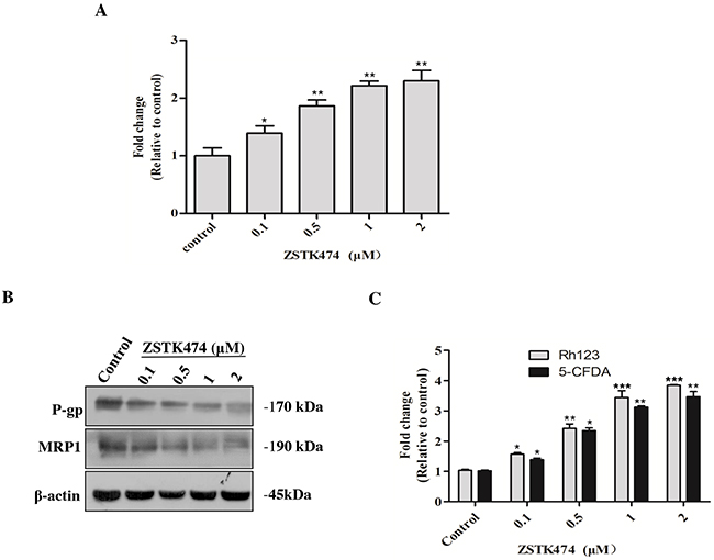 ZSTK474 increased the intracellular accumulation of ADR via inhibiting MDR proteins in HL60/ADR cells.