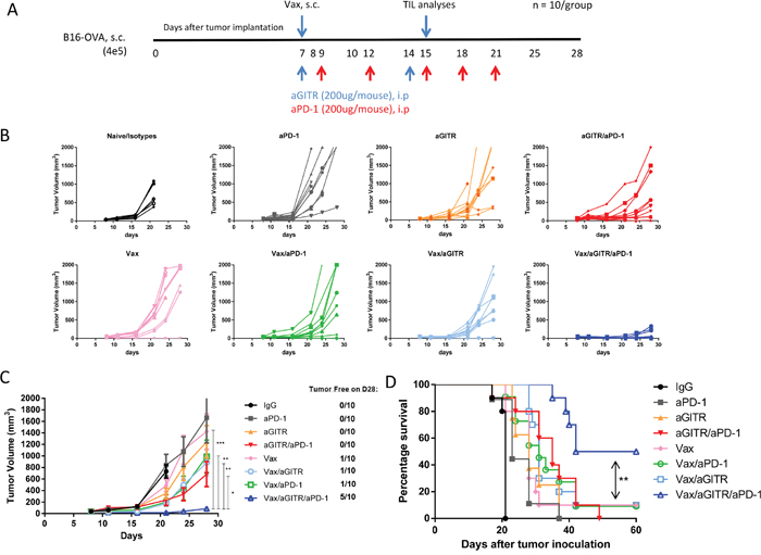 Combination aGITR/aPD-1 therapy with vaccination promotes B16-OVA tumor rejection in mice.
