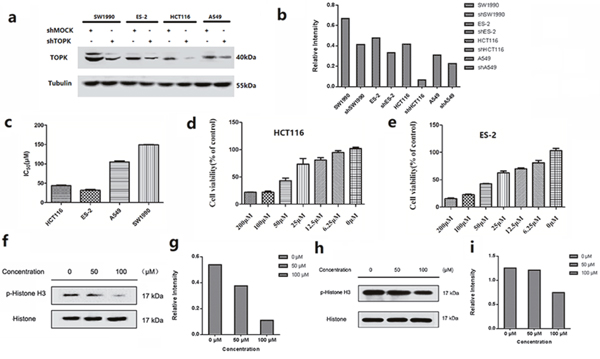 In vitro antiproliferative activity of ilaprazole.