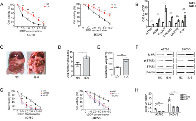 IL-6 induces cDDP resistance of EOC cells.