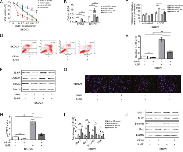 miR-204 sensitizes EOC cells to cDDP by inhibiting IL-6R/STAT3 signaling.