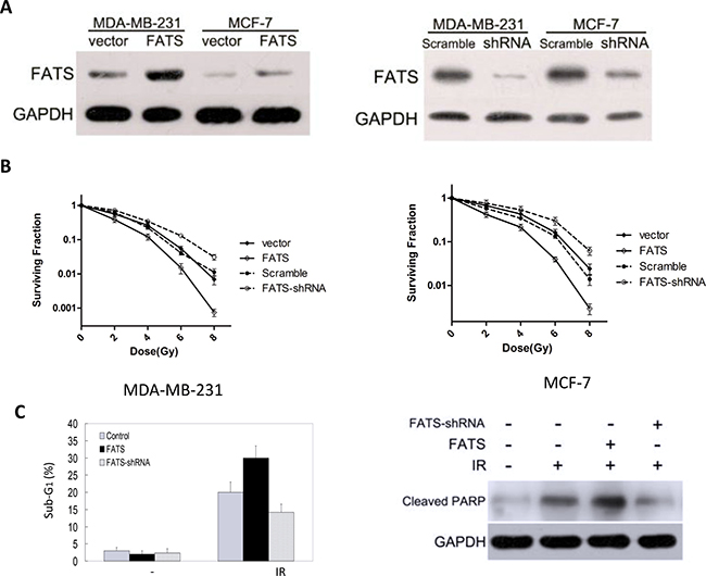 FATS mRNA level in breast cancer cells predicts the sensitivity to radiation treatment.