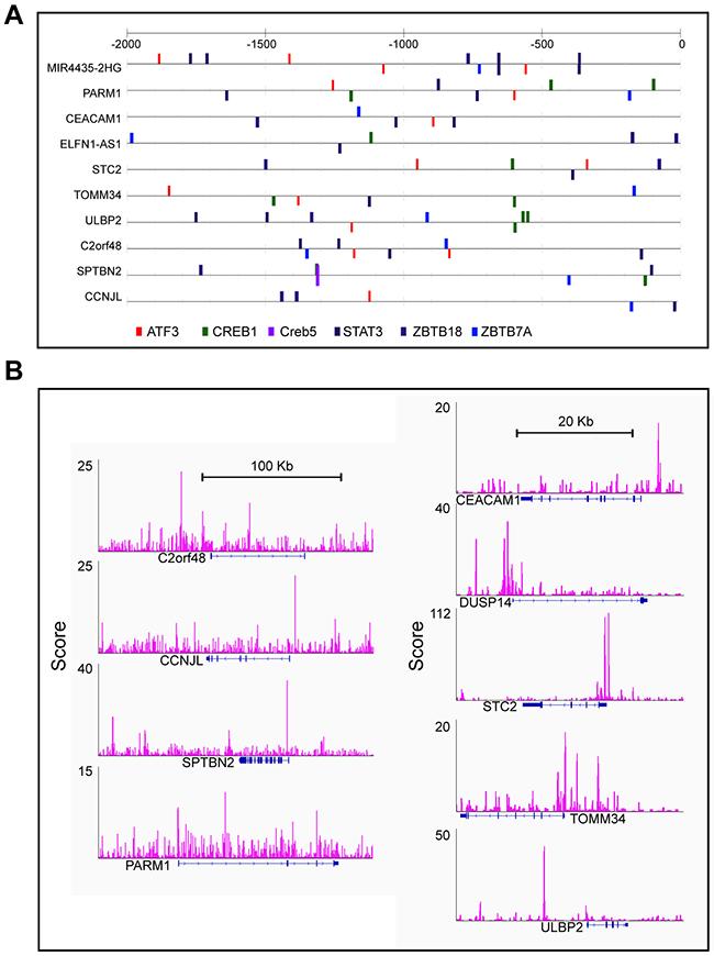 ATF3 presented binding motif in subset candidate genes.