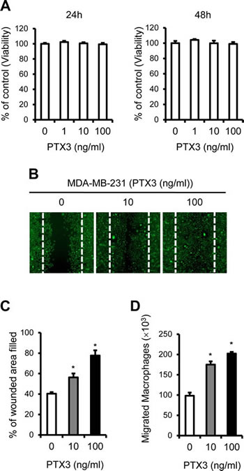 PTX3 enhances breast cancer cell migration and macrophages migration to cancer cells.