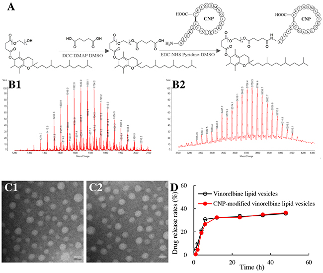 Synthesis of a CNP-TPGS1000 conjugate and characterization of CNP-modified lipid vesicles.