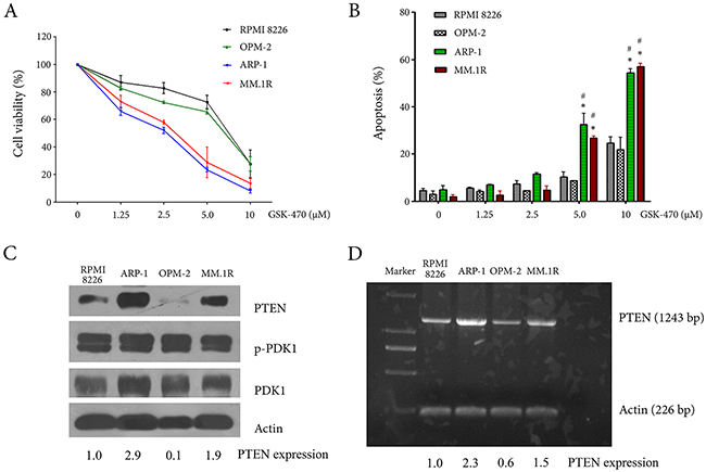 Anti-myeloma effect of GSK-470 and the constitutive expression of PTEN and PDK1 in myeloma cell lines.