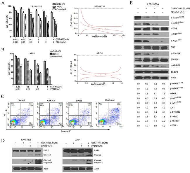 Combination of GSK-470 with PP242 enhances cytotoxicity against MM cells via completely inhibited the phosphorylation of AKT and activity of mTORC1/C2.