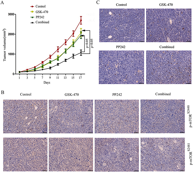 Antitumoral efficacy of GSK-470 combined with PP242 in vivo.