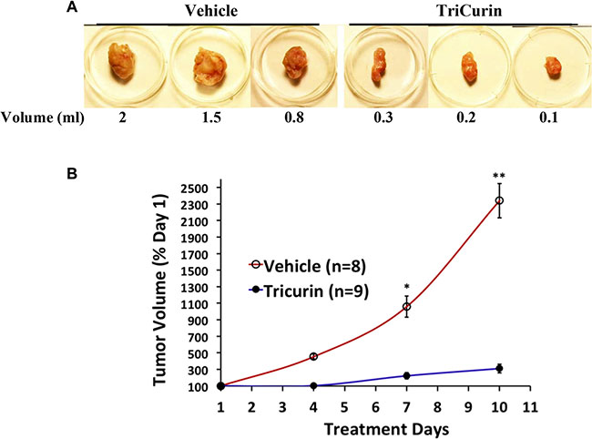 Intralesional TriCurin treatment causes a dramatic inhibition of TC-1 tumor growth in mice.