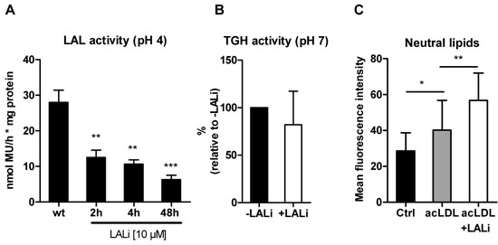 Pharmacological inhibition with LAListat-2 effectively inhibits LAL activity.