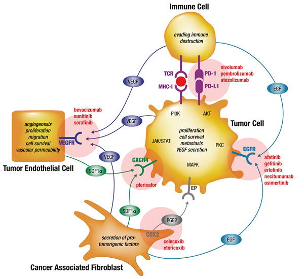 Simplified model of preventing drug resistances by simultaneous targeting of interdependent signaling in the cellular tumorigenic network of NSCLC tumors using already marketed drugs.