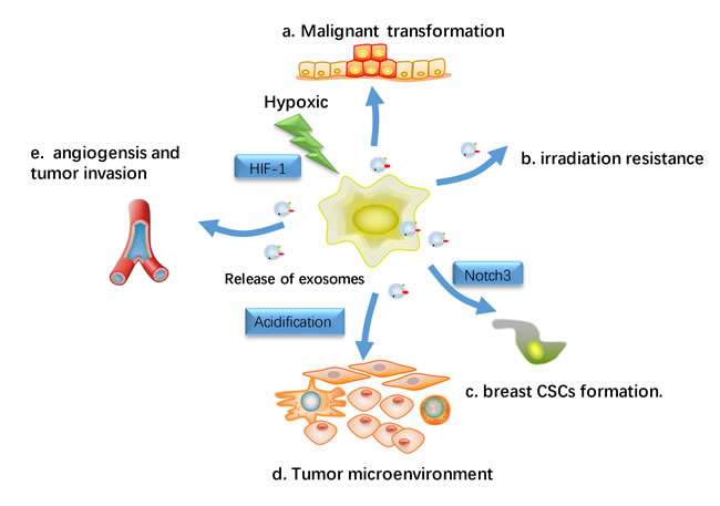 Hypoxic effects on exosomes-Influenced metastasis.