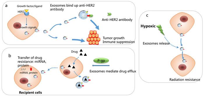 Mechanisms responsible for exosomes-associated drug resistance.
