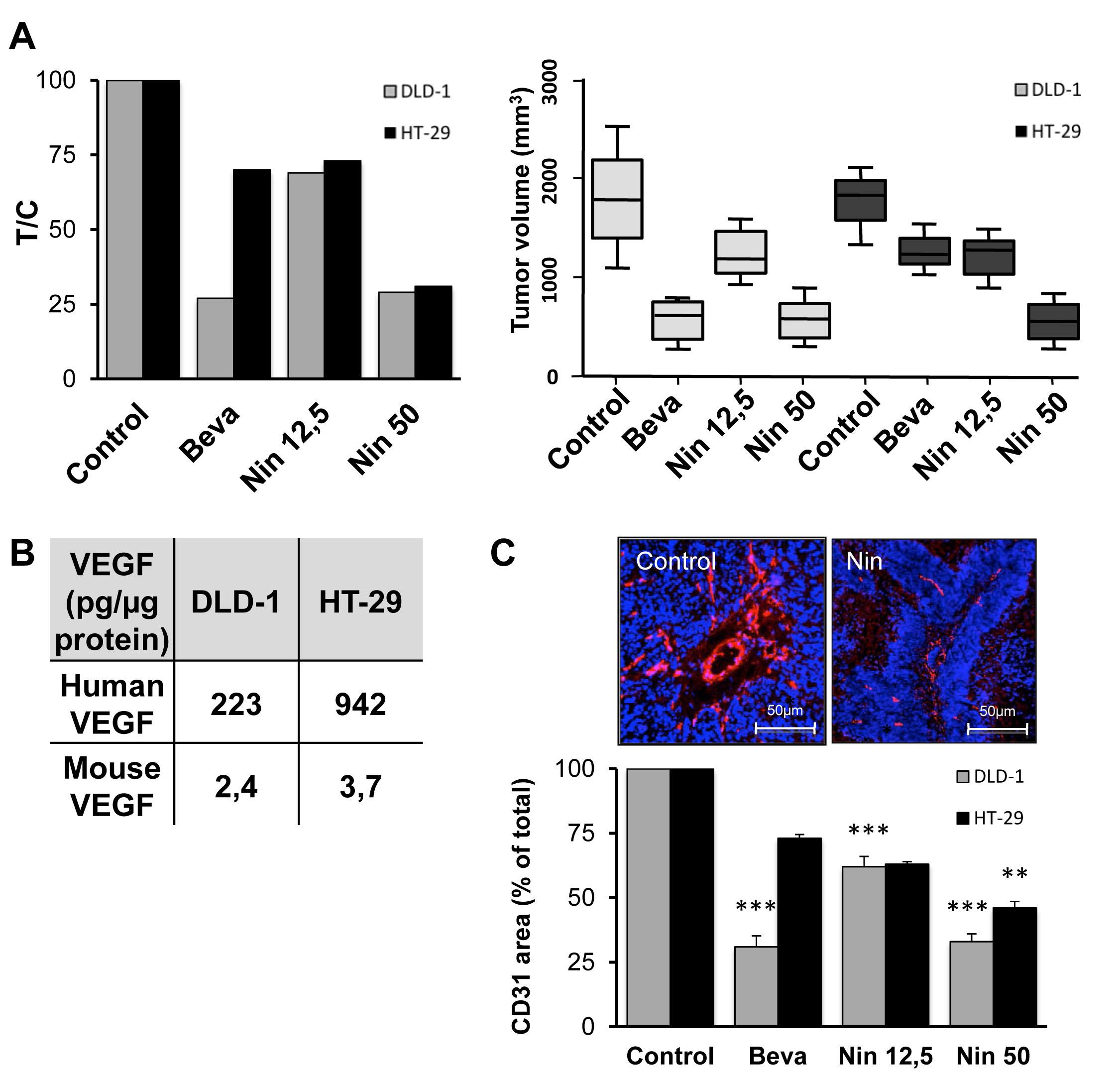 Influence of bevacizumab and nintedanib on tumor growth and angiogenesis in CRC xenografts.