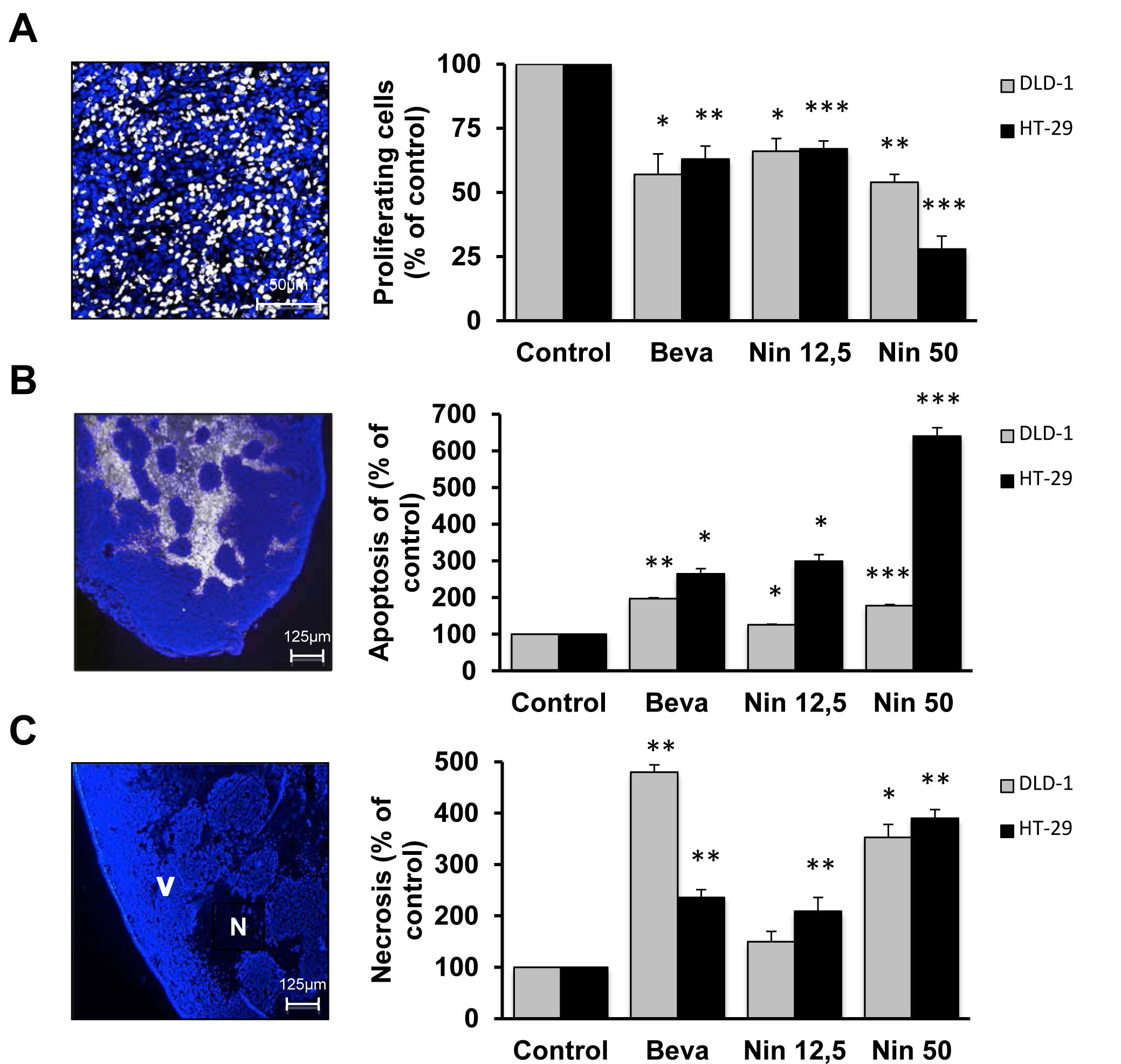 Cytostatic and cytotoxic effects of bevacizumab and nintedanib in CRC xenografts.