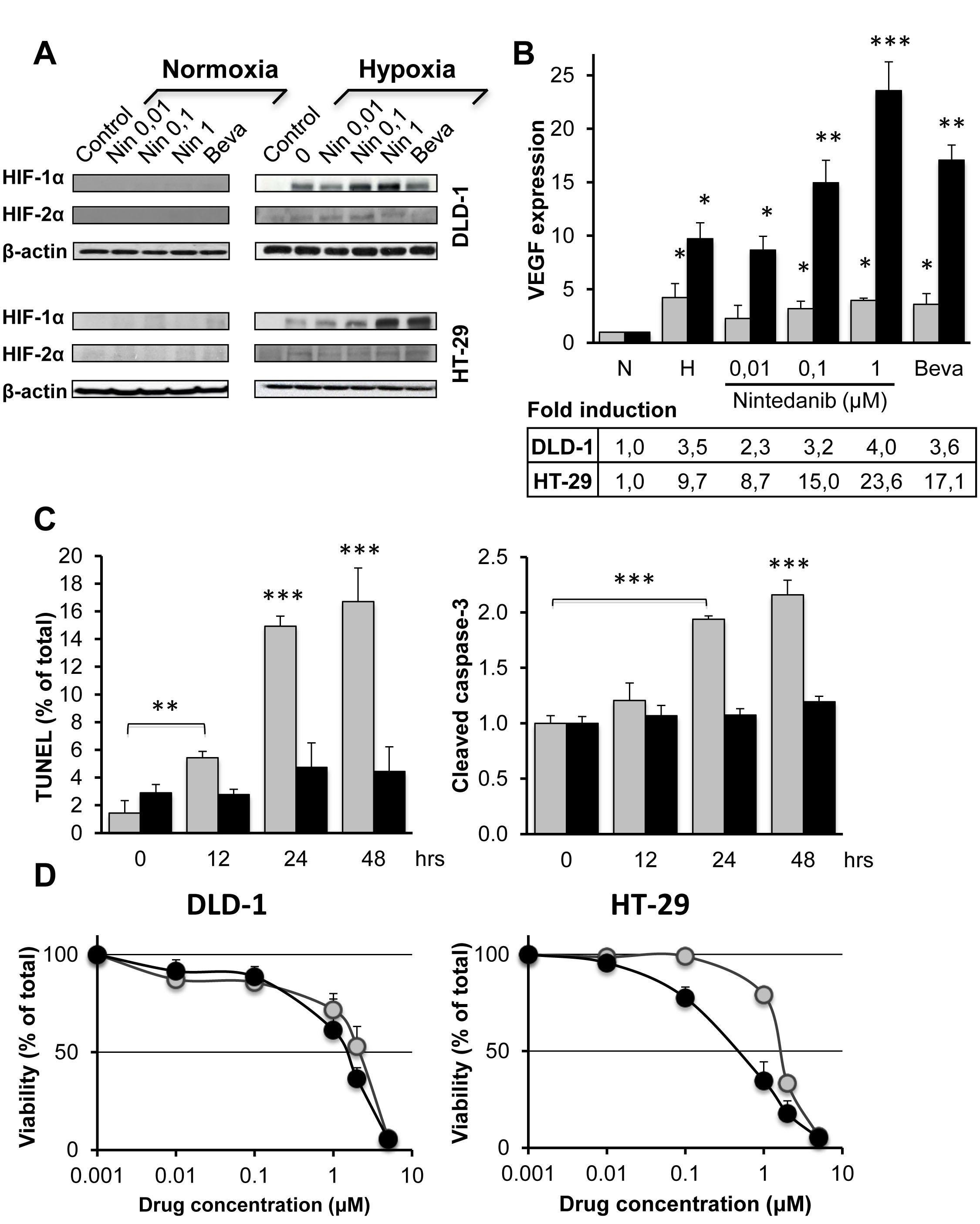 Influence of bevacizumab and nintedanib on CRC cells under normoxia and hypoxia.