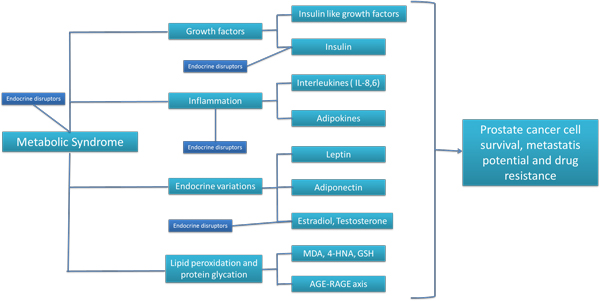 Putative relations among metabolic syndrome, endocrine disruptors, growth factors, inflammation, lipid/protein chemical modifications and prostate cancer biology.