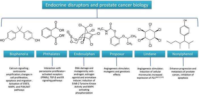 Relationships between endocrine disruptors and prostate cancer biology.