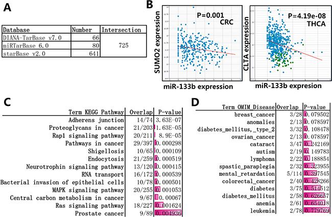 Enrichment analysis of the target genes of miR-133b.