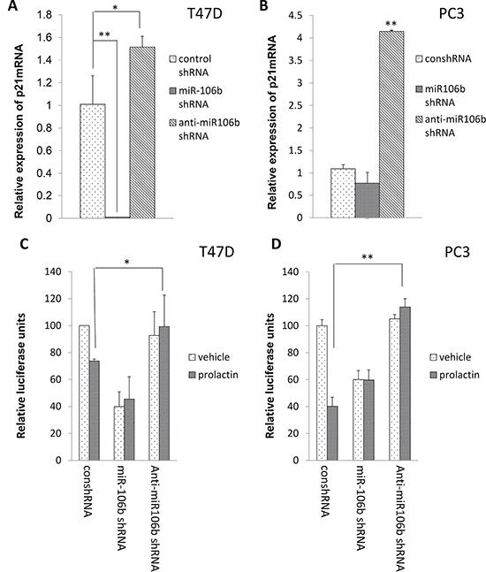 Inhibition of miR-106b by anti-miR106b shRNA blocked prolactin mediated effect on both the 3′UTR of p21 mRNA and p21 mRNA expression.