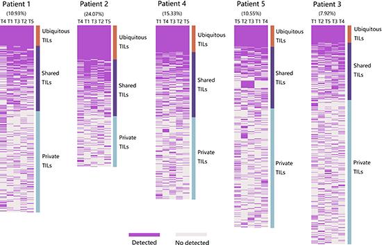 Spatial heterogeneity of TIL clones in five PLC patients.