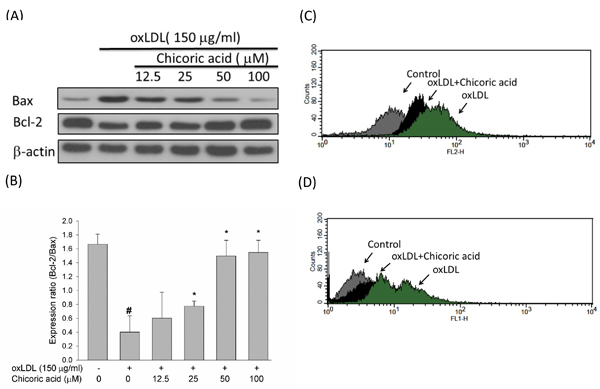 Effects of chicoric acid on oxLDL-triggered endothelial apoptosis.