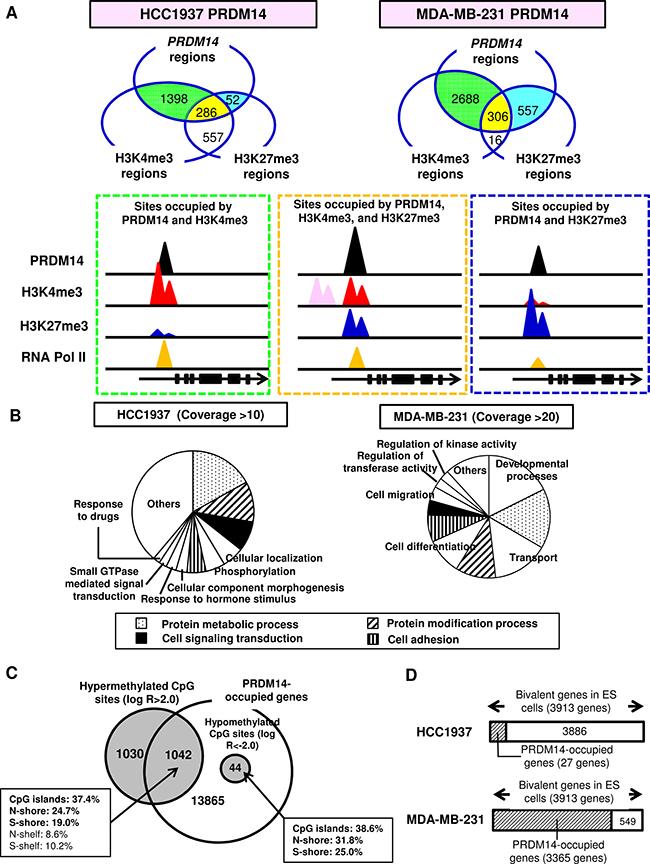 PRDM14 induces epigenetic changes.
