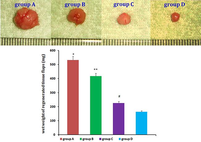 Neogenetic fat flap macroscopic findings.