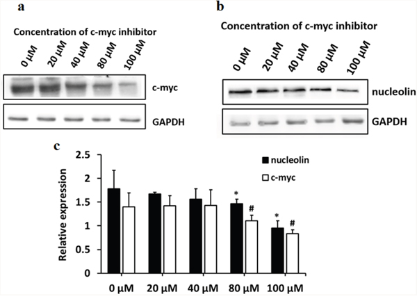 c-myc controls the expression of nucleolin in L-02 cells.