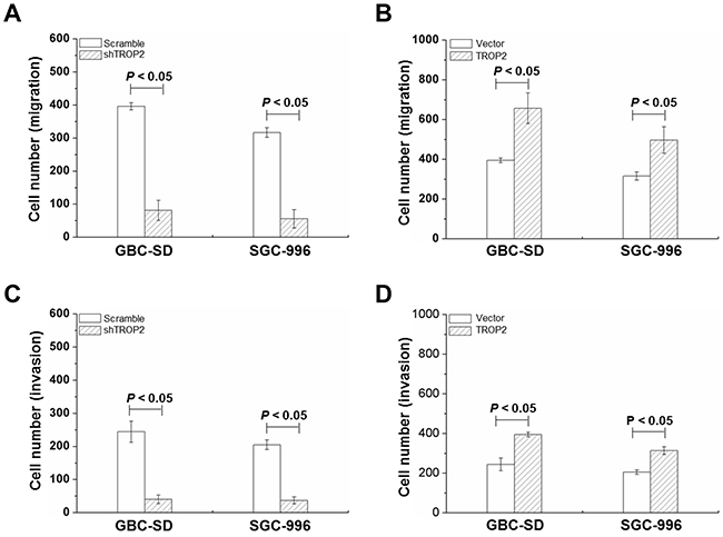 Effects of TROP2 on migration and invasion of GBC-SD and SGC-996 cells.