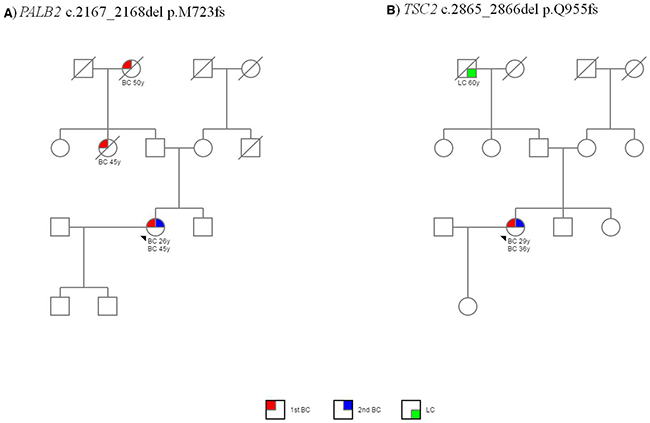 Pedigrees of two patients with a mutation in extra-BRCA genes.