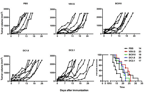 Intranodal vaccination of targeted LVs encoding ovalbumin results in prolonged survival in an E.G7-OVA model.