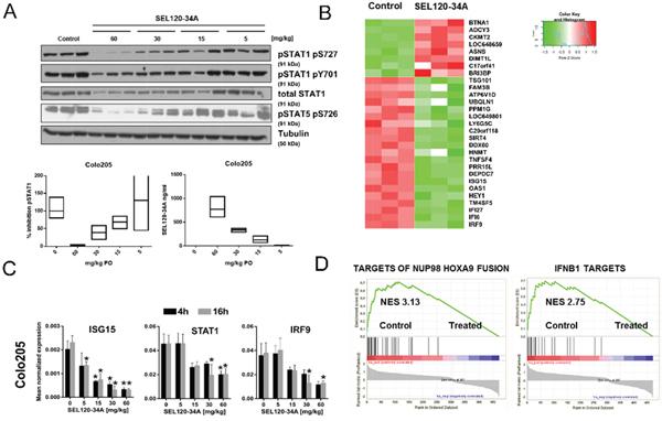 Xenografts transcriptome profiling reveals alteration in IFN- responsive genes upon SEL120-34A treatment in vivo.