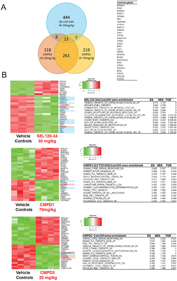 Transcriptional profiling of Colo-205 xenografted tumors revealed differences between SEL120-34A and two other CDK8 inhibitors - CCT251545 (CMPD1) and CMPD3.